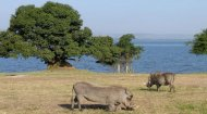 Lake Mburo National Park